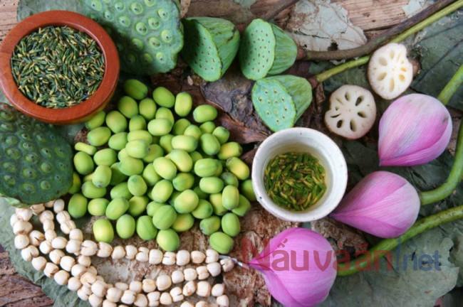 công dụng của hạt sen đối với sức khỏe